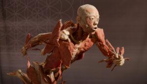 locandina di Real Body Experience a Bologna a Palazzo Pallavicini, il corpo umano in mostra